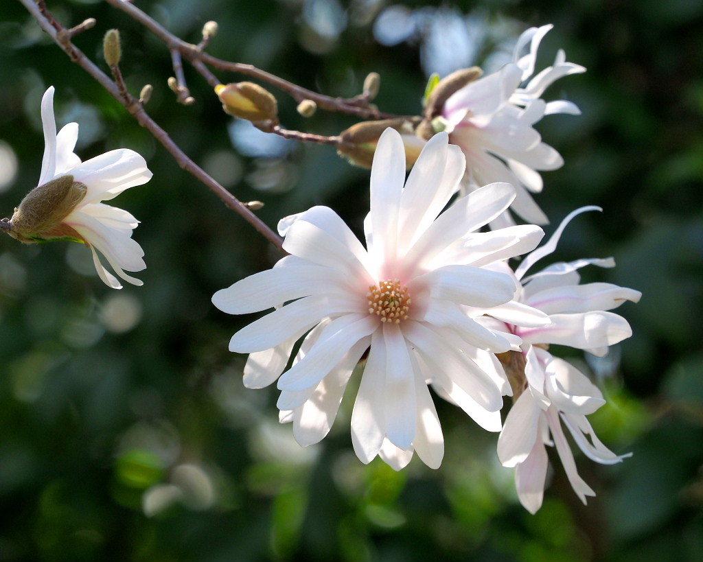 春爛漫のガーデンで 花々_c0305565_17410540.jpg