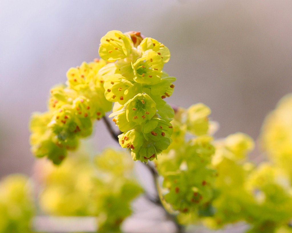 春爛漫のガーデンで 花々_c0305565_17415740.jpg