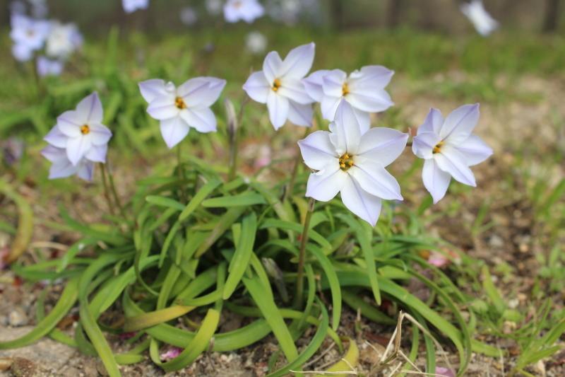 3月20日 桜をもとめて_a0023466_21171687.jpg