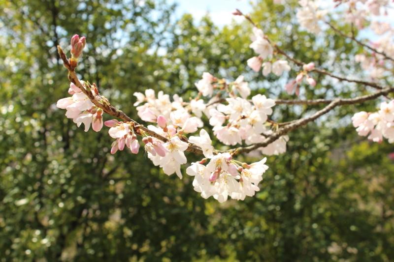3月20日 桜をもとめて_a0023466_21180394.jpg