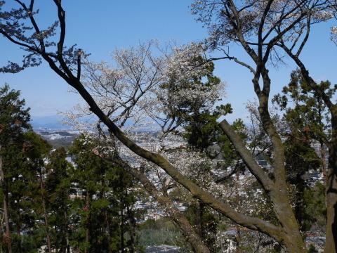 感動!そろって見頃は初体験3・20六国見山夫婦桜now_c0014967_19100708.jpg