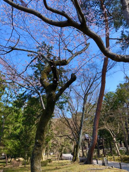 南禅寺(京都市)_d0339676_16333052.jpg