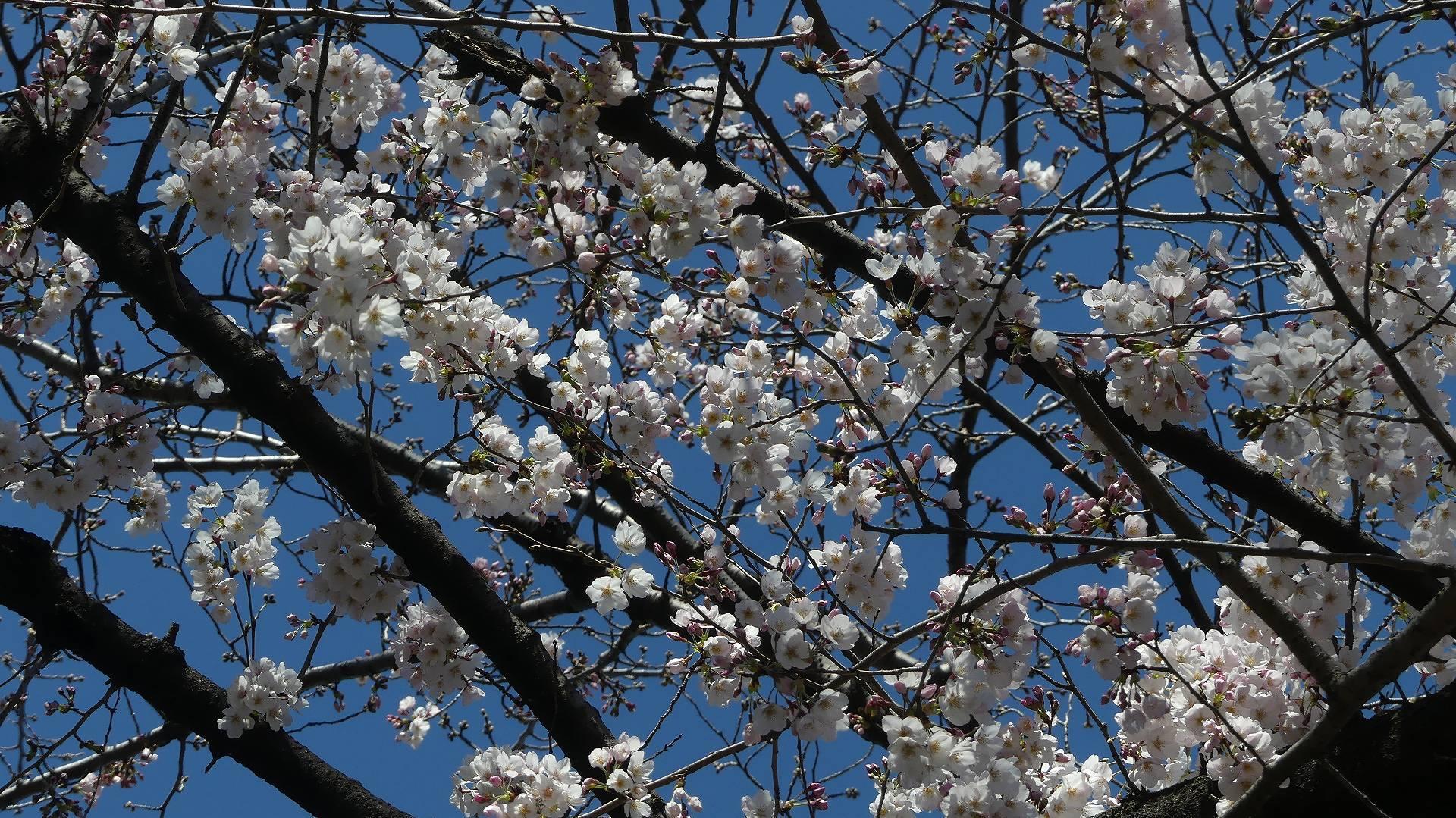 春の声 【 2020 3/20(金)  】_a0185081_23512871.jpg