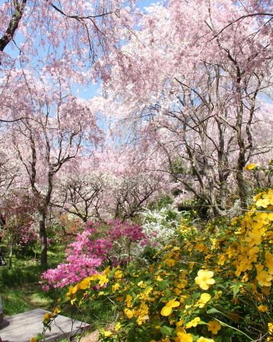 ◆ハルメク連載・・・第12回「おすすめのお花見スポット」_e0154682_23530224.jpg