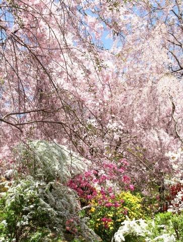 ◆ハルメク連載・・・第12回「おすすめのお花見スポット」_e0154682_23551428.jpg
