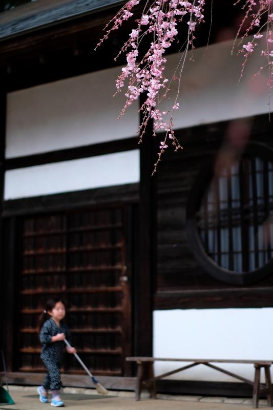 平穏な世界になりますように 水戸「六地蔵寺」 2020・03・20_e0143883_15521019.jpg