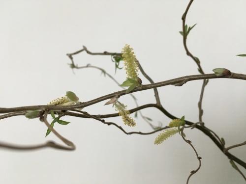 春を待つ室礼_f0347891_14305188.jpeg