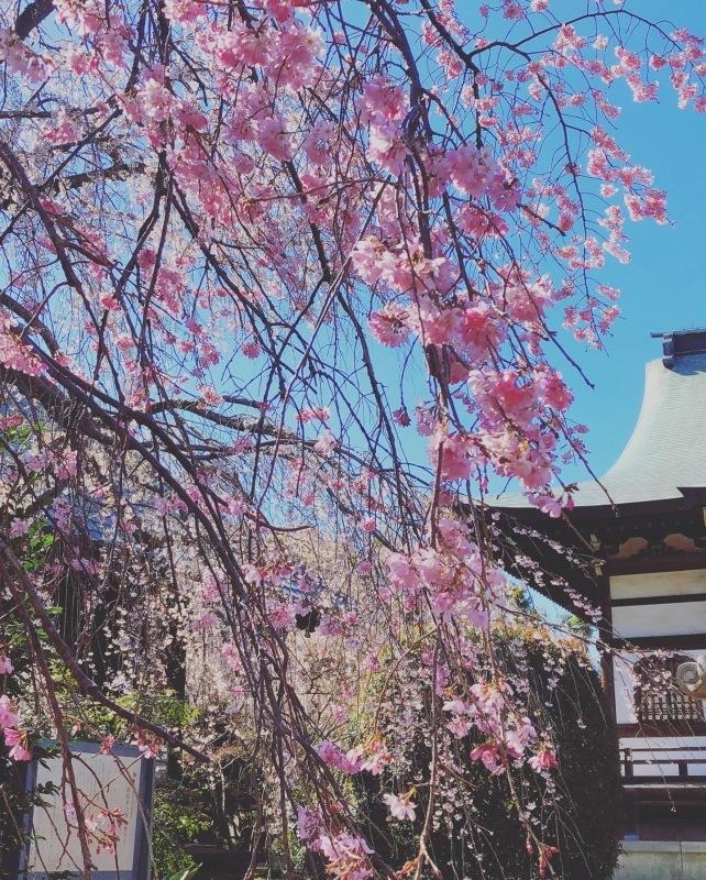 桜の下で_a0129492_19493630.jpeg