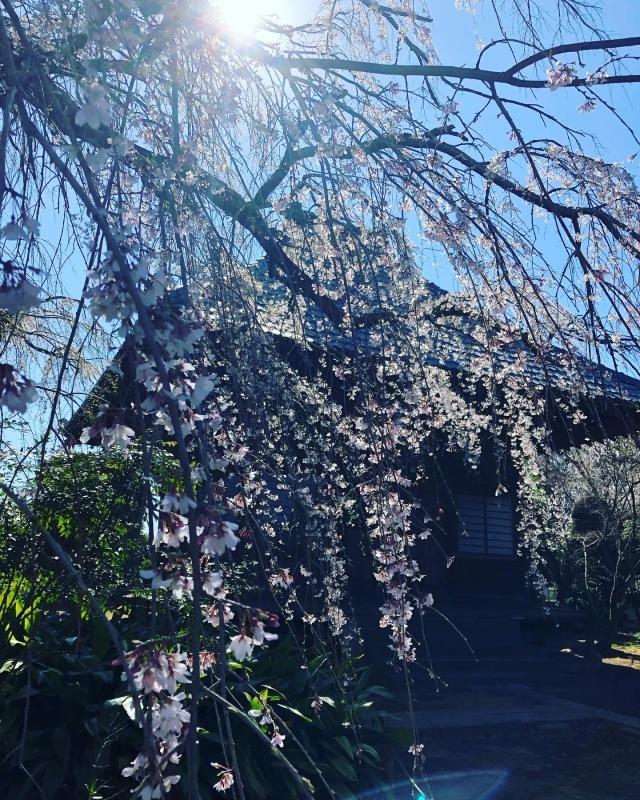 桜の下で_a0129492_19511423.jpeg