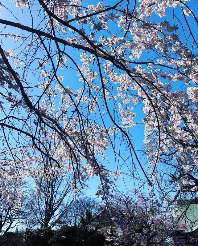 桜の下で_a0129492_19515185.jpeg