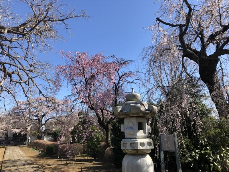 桜の下で_a0129492_19540094.jpeg