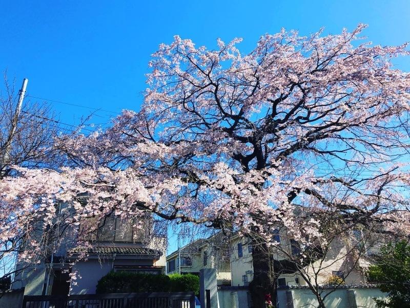 桜の下で_a0129492_19543268.jpeg