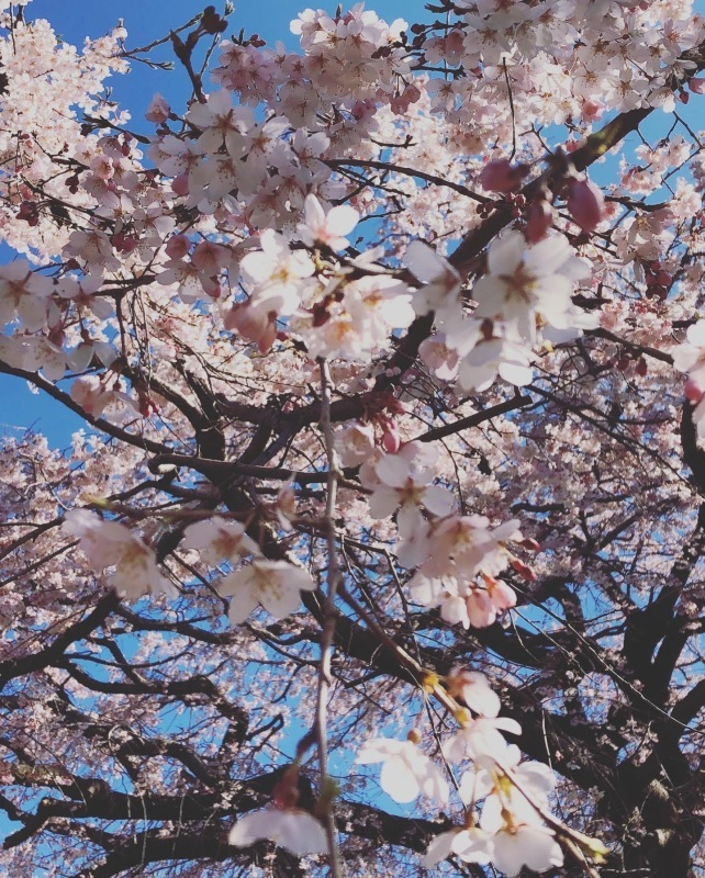 桜の下で_a0129492_19594669.jpeg
