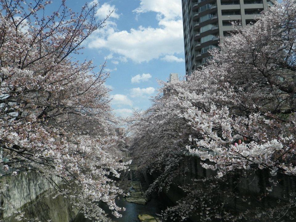 神田川で繋がってる_f0017300_17412059.jpg