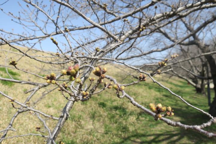 春の陽気に誘われて..._c0132901_19360551.jpg
