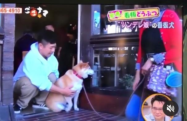看板犬クウ(NHK ごごナマ)_a0233202_17520314.jpeg