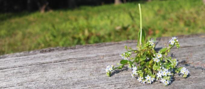 春うらら   9_b0239402_17424544.jpg