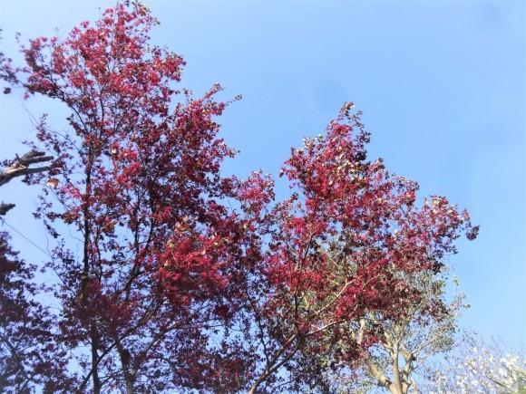 紅花常盤万作_e0352610_16553436.jpg