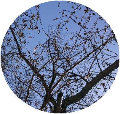 RoCoCoはお休みですが、古本市開催中!_f0223914_12043935.jpg