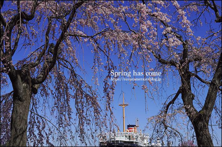 春が来た!_f0100215_23541090.jpg