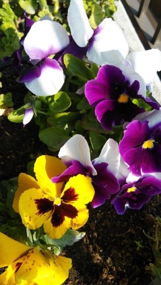 投稿)春の花_d0070316_12001008.jpg