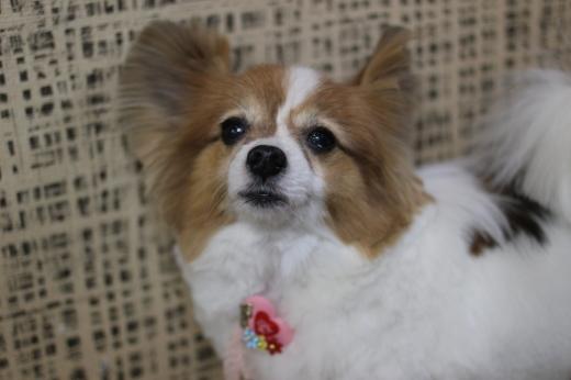 3月16日ご来店のワンちゃんです!!_b0130018_09505833.jpg