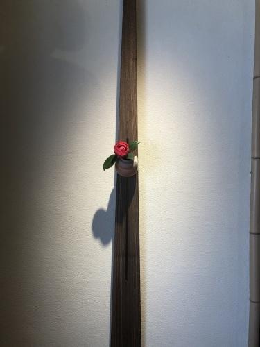 桜が咲き始めました〜🌸_a0197730_13203202.jpeg