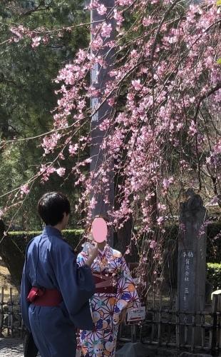 桜が咲き始めました〜🌸_a0197730_13210198.jpeg