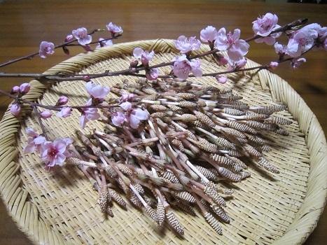 春のお彼岸_b0177436_20283426.jpg
