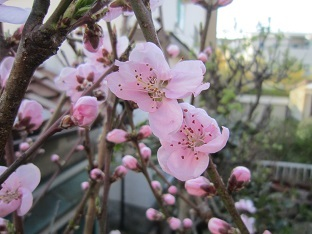 春のお彼岸_b0177436_20381035.jpg