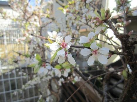 春のお彼岸_b0177436_20425462.jpg
