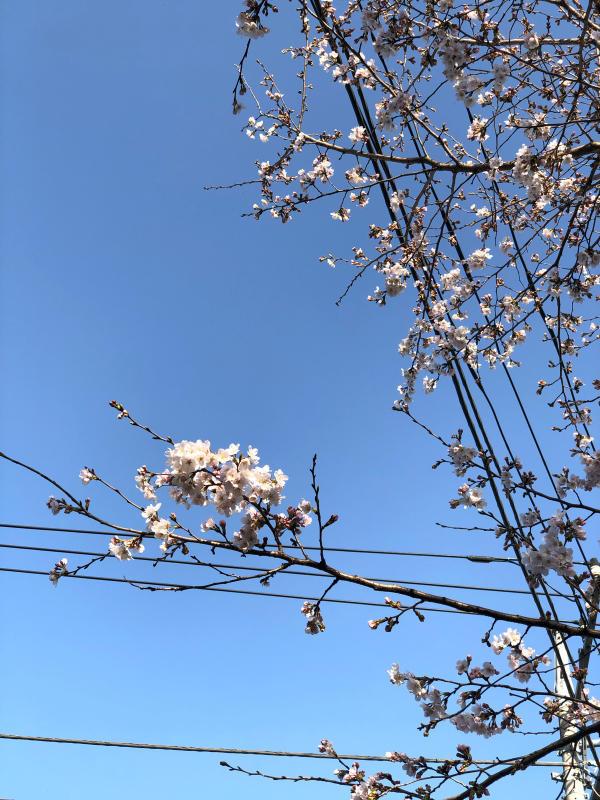 春_c0048536_19050015.jpg
