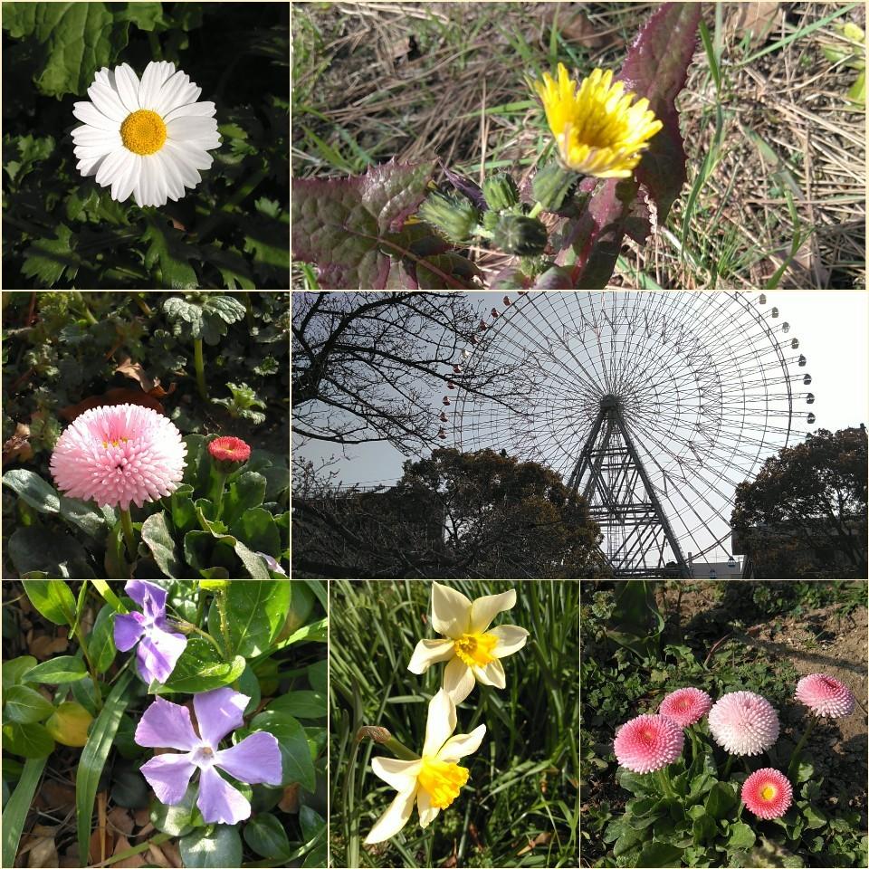 天保山公園にて🌊_c0289636_21452844.jpg