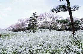 桜がさきました。_c0221937_18390597.jpg