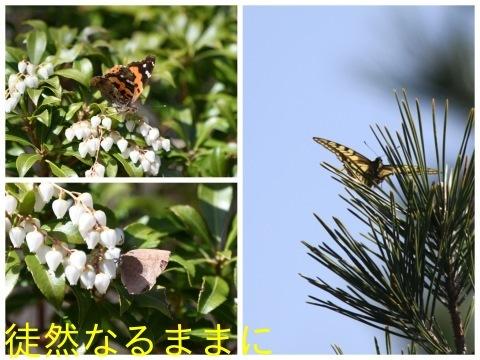 ミヤマセセリ・ギフチョウ_d0285540_19005389.jpg