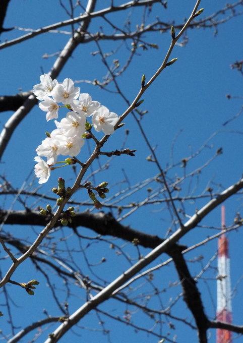 花見にはまだちょいと早い東京だがしかし_d0027243_00125598.jpg