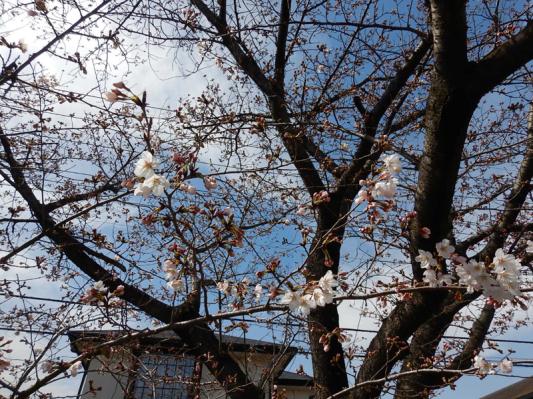 春の小噺♪(3月21日の走行)_b0136045_15181148.jpg