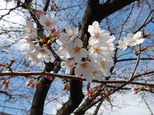 春の小噺♪(3月21日の走行)_b0136045_15181239.jpg