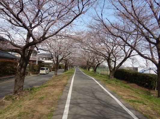 春の小噺♪(3月21日の走行)_b0136045_15181442.jpg