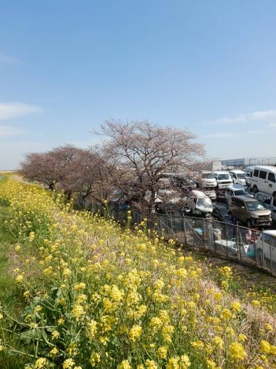 春の小噺♪(3月21日の走行)_b0136045_15190422.jpg