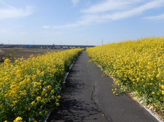 春の小噺♪(3月21日の走行)_b0136045_15203542.jpg