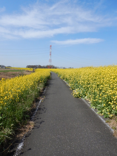 春の小噺♪(3月21日の走行)_b0136045_15203802.jpg