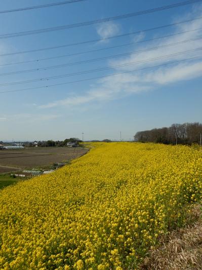 春の小噺♪(3月21日の走行)_b0136045_15212144.jpg