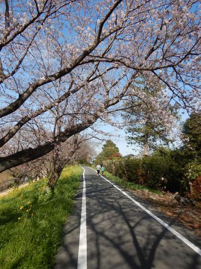 春の小噺♪(3月21日の走行)_b0136045_15213989.jpg