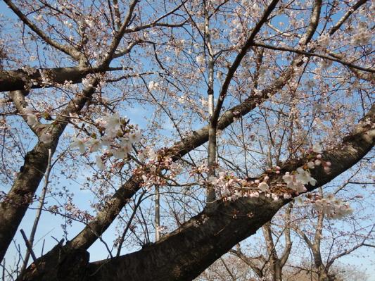 春の小噺♪(3月21日の走行)_b0136045_15214973.jpg