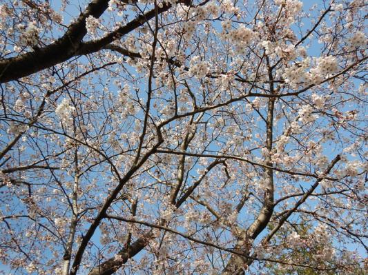 春の小噺♪(3月21日の走行)_b0136045_15220068.jpg