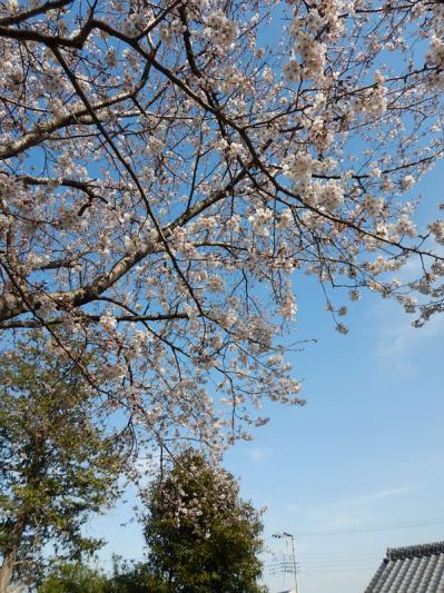 春の小噺♪(3月21日の走行)_b0136045_15230822.jpg