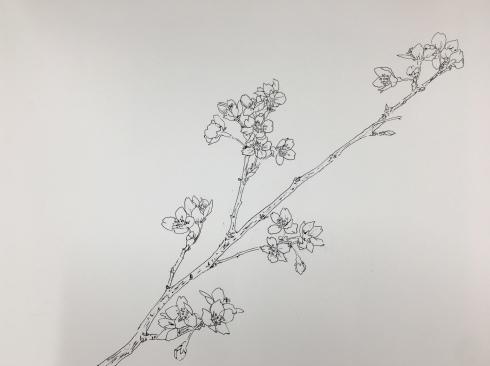 桜。日本画教室。_c0160745_18310531.jpeg