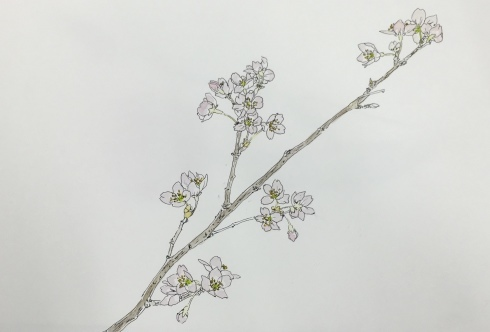 上野日本画教室。_c0160745_21255310.jpeg