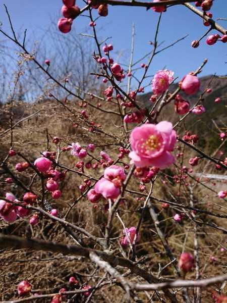 3月21日(土)ポカポカ陽気🌼_e0020051_14453374.jpg